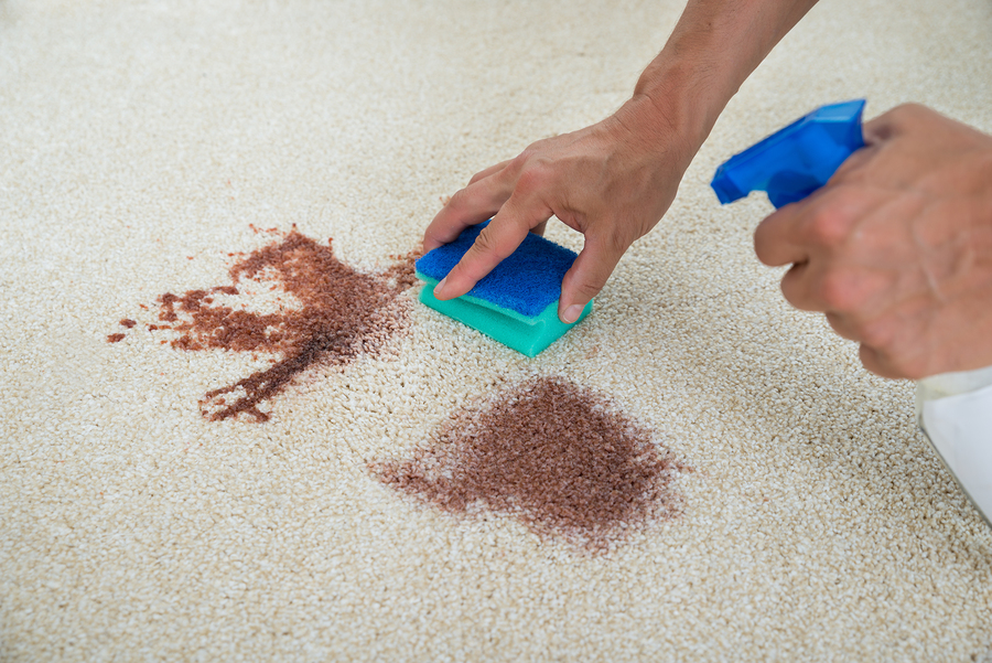 Martha Stewart S Ultimate Guide To Carpet Stain Removal